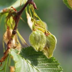 Früchte– Alice Kracht, CC BY-SA 4.0