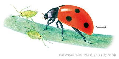 Wawra's Naturpostkarten 19-2.jpg