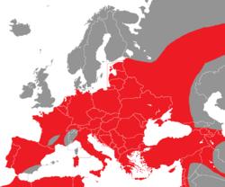 Verbreitung des Weißstorches in Europa - Alice Chodura (CC-BY-SA-3.0)