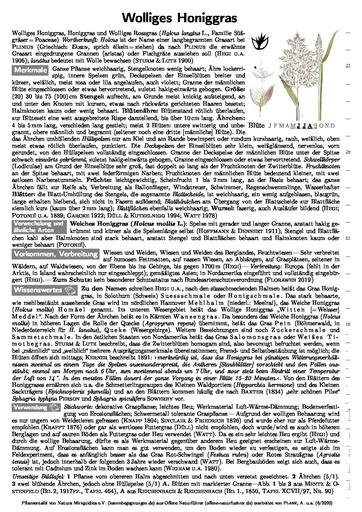 Wolliges Honiggras (Pflanzentafel Natura Miriquidica e.V.).pdf