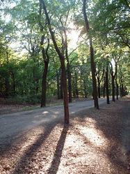 Hauptweg des Volksparkes Wuhlheide – Queryzo, CC BY-SA 3.0