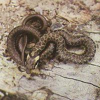 Juveniles Tier