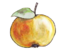 Zeigerwert Nährstoffzahl - Apfel (Hans Schönewolf, Natura Miriquidica e.V. 2013).png