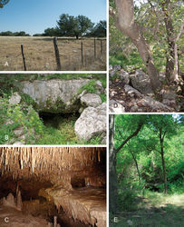 Figure 1. Images of habitat and cave entrances for Tayshaneta species. A Cobb's Ranch, near Cobb's Caverns, Williamson County, Texas, type locality for Tayshaneta anopica (Gertsch, 1974) showing karstic terrain B Entrance to Government Canyon Bat Cave, Bexar County, Texas, type locality for Tayshaneta microps (Gertsch, 1974) C General habitat of Tayshaneta sandersi sp. n., District Park Cave, Travis County, Texas, (M. Sanders) D Entrance to Lithic Ridge Cave, Bexar County, Texas, type locality for Tayshaneta whitei sp. n. E Entrance to Three Miles Bat Cave, Williamson County, Texas.