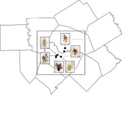 Figure 55. Distribution map showing morphotypes within Tayshaneta myopica (Gertsch, 1974). A Tooth Cave B Goat Cave C McNeil Bat Cave D Jester Estates Caves E Steiner Telephone Pole Cave F Geode Cave.