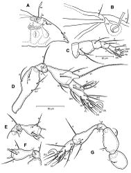 Figure 2. Conchogneta glabrisensillata sp. n. A Lateral view of prodorsum and anterior part of notogaster B Humeral region, showing tubercles Ha and Hp C Palp, right, antiaxial view D Leg I, right, antiaxial view E Genu and tibia of leg II, right, antiaxial view F Genu and tibia of leg III, right, antiaxial view G Leg IV, right, antiaxial view.