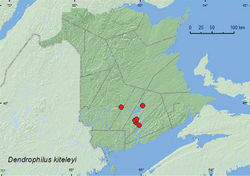 Map 6. Collection localities in New Brunswick, Canada of Dendrophilus kiteleyi.