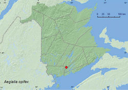 Map 4. Collection localities in New Brunswick, Canada of Aegialia opifex.