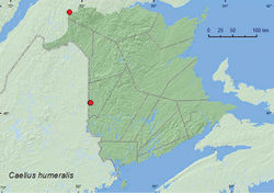 Map 5. Collection localities in New Brunswick, Canada of Caelius humeralis.