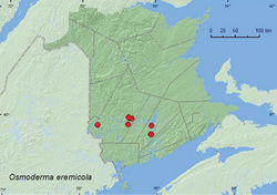 Map 14. Collection localities in New Brunswick, Canada of Osmoderma eremicola.