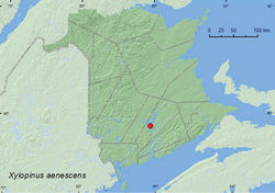 Map 15. Collection localities in New Brunswick, Canada of Xylopinus aenescens.