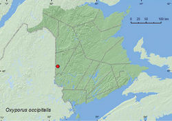 Map 1. Collection localities in New Brunswick, Canada of Oxyporus occipitalis.