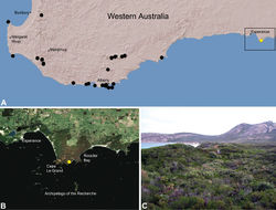 Figure 22. Zephyrarchaea marki sp. n., distribution and habitat: A, topographic map showing the known distribution of Archaeidae in south-western Western Australia, with collection localities for Zephyrarchaea marki highlighted in yellow; B, satellite image showing detail of inset (A); C, temperate coastal heathland at the type locality – Thistle Cove, Cape Le Grand National Park, Western Australia (June 2010). Image (C) by M. Rix.