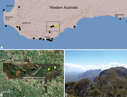 Figure 23. Zephyrarchaea robinsi (Harvey, 2002a), distribution and habitat: A, topographic map showing the known distribution of Archaeidae in south-western Western Australia, with collection localities for Zephyrarchaea robinsi highlighted in yellow; B, satellite image showing detail of inset (A); C, montane heathland at the type locality – Ellen Peak, Stirling Range National Park, Western Australia (November 2007), with Bluff Knoll visible in the distance. Image (C) by M. Rix.