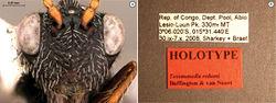 Figure 49. Tessmannella roberti Buffington & van Noort, sp. n., holotype A head, anterior view B labels.