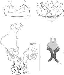 Figure 6. Trichognathus marginipennis, female a sternite VIII b tergites VIII (laterotergites IX, gonocoxites 1 and 2 in dash line) c female genitalia and pygidial glands d gonocoxites 2.