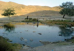 Figure 4. Natural shallow pond and type locality of Aphanius arakensis sp. n., in the Namak Lake Basin, 5 km SE of Arak city, Iran (see Fig. 1).