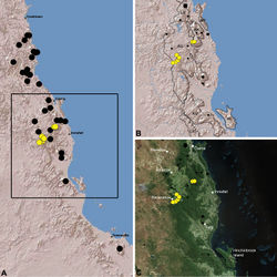 Figure 16. Distribution of Austrarchaea daviesae Forster & Platnick, 1984: A, topographic map showing the known distribution of Archaeidae in the north-eastern Queensland Wet Tropics bioregion, with collection localities for Austrarchaea daviesae highlighted in yellow; B–C, topographic and satellite maps showing detail of inset (A). Labelled boundaries in (B) denote upland subregional zones of faunal endemism identified by Winter et al. (1984), Williams et al. (1996) and other authors for the central Wet Tropics (modified from Edward 2011). Small squares in (B–C) denote unidentified juvenile specimens; small circles denote unidentified female specimens; large circles denote described species of Austrarchaea. AU = Atherton Uplands; BK = Bellenden Ker/Bartle Frere; HI = Hinchinbrook Island; KU = Kirrama Uplands; LE = Lee Uplands; LU = Lamb Uplands; MT = Malbon-Thompson Uplands.