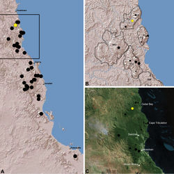Figure 17. Distribution of Austrarchaea wallacei sp. n.: A, topographic map showing the known distribution of Archaeidae in the north-eastern Queensland Wet Tropics bioregion, with collection localities for Austrarchaea wallacei highlighted in yellow; B–C, topographic and satellite maps showing detail of inset (A). Labelled boundaries in (B) denote upland subregional zones of faunal endemism identified by Winter et al. (1984), Williams et al. (1996) and other authors for the northern Wet Tropics (modified from Edward 2011). Small squares in (B–C) denote unidentified juvenile specimens; small circles denote unidentified female specimens; large circles denote described species of Austrarchaea. BM = Black Mountain Corridor; CU = Carbine Uplands; FU = Mt Finnigan Uplands; TU = Thornton Uplands; WU = Windsor Uplands.