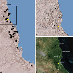 Figure 20. Distribution of Austrarchaea tealei sp. n.: A, topographic map showing the known distribution of Archaeidae in the north-eastern Queensland Wet Tropics bioregion, with collection localities for Austrarchaea tealei highlighted in yellow; B-C, topographic and satellite maps showing detail of inset (A). Labelled boundaries in (B) denote upland subregional zones of faunal endemism identified by Winter et al. (1984), Williams et al. (1996) and other authors for the northern Wet Tropics (modified from Edward 2011). Small squares in (B–C) denote unidentified juvenile specimens; small circles denote unidentified female specimens; large circles denote described species of Austrarchaea. BM = Black Mountain Corridor; CU = Carbine Uplands; FU = Mt Finnigan Uplands; TU = Thornton Uplands; WU = Windsor Uplands.