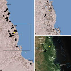 Figure 22. Distribution of Austrarchaea woodae sp. n.: A, topographic map showing the known distribution of Archaeidae in the north-eastern Queensland Wet Tropics bioregion, with collection localities for Austrarchaea woodae highlighted in yellow; B–C, topographic and satellite maps showing detail of inset (A). Labelled boundaries in (B) denote upland subregional zones of faunal endemism identified by Winter et al. (1984), Williams et al. (1996) and other authors for the central Wet Tropics (modified from Edward 2011). Small squares in (B–C) denote unidentified juvenile specimens; small circles denote unidentified female specimens; large circles denote described species of Austrarchaea. AU = Atherton Uplands; BK = Bellenden Ker/Bartle Frere; HI = Hinchinbrook Island; KU = Kirrama Uplands; LE = Lee Uplands; LU = Lamb Uplands; MT = Malbon-Thompson Uplands.