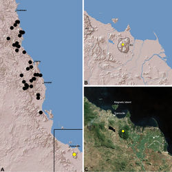Figure 23. Distribution of Austrarchaea hoskini sp. n.: A, topographic map showing the known distribution of Archaeidae in the north-eastern Queensland Wet Tropics bioregion, with collection localities for Austrarchaea hoskini highlighted in yellow; B–C, topographic and satellite maps showing detail of inset (A). Labelled boundaries in (B) denote upland subregional zones of faunal endemism identified by Winter et al. (1984), Williams et al. (1996) and other authors for the southern Wet Tropics (modified from Edward 2011). EU = Elliot Uplands; HU = Halifax Uplands.