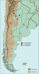 Figure 22. Distribution of Pseudogeniates species in Argentina