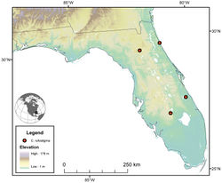 Figure 21. Map of southeastern U.S.A. (primarily Florida), showing position of localities for Cymindis rufostigma, new species.