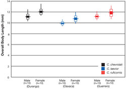 Figure 38. Hubbs-Perlmutter diagram illustrating overall body length (mm) variation in population samples of Cymindis chevrolati Dejean, Cymindis laevior (Bates), and Cymindis ruficornis (Bates). Horizontal lines show mean; vertical lines indicate sample range; white + colored boxes indicate 1.5 standard deviations each side of the mean; and colored boxes indicate 2 standard errors each side of the mean.
