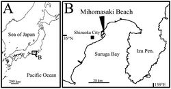 Figure 1. Sampling site. A map of Japan B type locality of Polycopetta quadrispinata sp. n.
