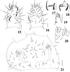 Figures 15–21. Micronella longisensilla sp. n. 15 Dorsal view of Ant III–IV 16 Ventral view of Ant III–IV 17 Detail of Ant III organ 18 Detail of Ant III organ (same specimen of Fig. 17, right antennae) 19 Maxilla 20 Labium 21 Head. Scale bars: 10μm (15–20); 20μm (21). x represents missing chaeta.
