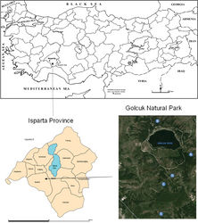 Figure 1. Location of the Gölcük Natural Park within Turkey and position of the collection sites of Urartucoris ermolenkoi P. V. Putshkov, 1979 within the Natural Park.