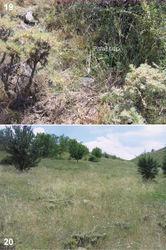 Figures 19–20. Microhabitats of Urartucoris ermolenkoi P. V. Putshkov, 1979, showing also placement of the pitfall trap 19 collecting site D 20 collecting site E. (Photos G. Japoshvili).