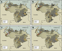 Figures 5–8. 5 Map of Venezuela, showing collection localities for Pharceonus volcanus (White Triangle), Pharceonus grandis (White Circle), Neblinagena prima (White Square), and Neblinagena doylei (Black Circle) 6 Phanocerus clavicornis (Black Circle) 7 Phanocerus congener (White Circle) 8 Phanocerus rufus (Black Circle), Pharceonus ariasi (Black Square).