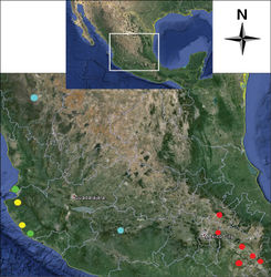 Figure 34. Map of central Mexico showing geographic position of collecting localities for: Cymatodera bogcioides (yellow circles); Cymatodera pueblae (red circles); Cymatodera mitae (green circles); and Cymatodera lineata (light blue circles).
