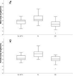 Figure 36. Boxplots of male (above) and female (below) body length in selected populations of Ablattaria laevigata; Gr. & Tr. (Greece & Turkey), It. (Italy), CE (Central Europe).