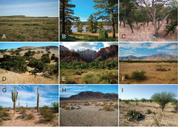 """Figure 1. Breadth of diversity of Aphonopelma species habitat types across the United States. A grassland prairie, Otero Co., Colorado B high-elevation pine/conifer in Coconino Co., Arizona C mid-elevation oak woodland throughout the """"sky islands"""" of southeastern Arizona (e.g. Madera Canyon in the Santa Rita Mountains) D grass/oak foothills of the Sierra Nevada Mountains, Mariposa Co., California E Zion National Park, Utah F Chihuahuan Desert below the Chiricahua Mountains in Cochise Co., Arizona G Sonoran Desert in Pinal Co., Arizona H Mojave Desert in San Bernardino Co., California I Tamaulipan thornscrub in Starr Co., Texas."""