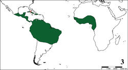 Figure 3. Approximate distribution area of Aviculariinae. ? = dubious record.