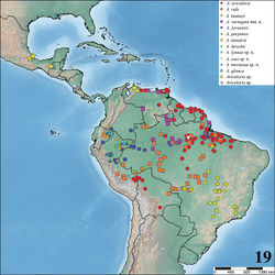 Figure 19. Map showing records of Avicularia Lamarck, 1818 species in Central and South America.