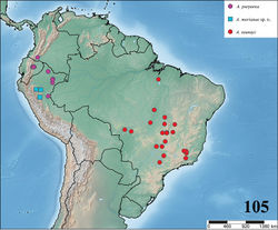 Figure 105. Map showing records of Avicularia taunayi (Melo-Leitão, 1920), Avicularia purpurea Kirk, 1990 and Avicularia merianae sp. n.