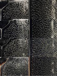 Figure 10. Meladema coriacea elytral sculpture; shoulder and middle left and right, respectively (DNA voucher codes). A Female, Turkey, Izmir (IBE-DV294) B male, Spain, Córdoba, Baena (NHM-IRM14A) C male, Morocco, Oued Massa (NHM-IRM2A) D male, Algeria, Aïn Damous (MNCN-HI6). Scale bar = 0.5 mm.