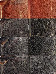 Figure 17. Meladema coriacea, Sahara, elytral sculpture; shoulder and middle left and right, respectively. A male, Chad, Tibesti, Koudou B female, Chad, Tibesti, Bassin de Gorrom C male, Algeria, Hoggar, Aguelmanne D female, Algeria, Hoggar, Aguelmanne. Scale bar = 0.5 mm.
