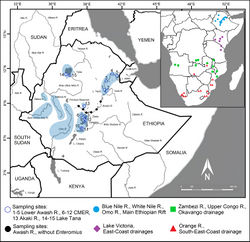 Figure 1. Map of Ethiopia, presenting sampling sites and examined material. Sampling sites: 1–13 Main Ethiopian Rift (1–5 Lower Awash R., distribution of Enteromius yardiensis sp. nov.; 6–12 lakes and rivers in Central Main Ethiopian Rift; 13 Akaki R., type locality of E. akakianus); 14–15 Blue Nile drainage, type locality of E. pleurogramma. In blue, known populations of small-sized E. paludinosus-like smiliogastrin barbs in Ethiopia. Locations in southern Africa included in CO1 and cytb analyses in red, green, and purple. Distribution data for Ethiopian populations from Golubtsov and Berendzen (2005)[7].