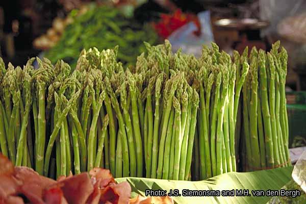Fichier:Asparagus officinalis Img0010.jpg