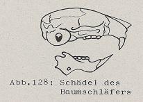 Schädel des Baumschläfers - DJN (1994) - Peter Boye - Heimische Säugetiere
