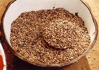 Fichier:Parkia biglobosa graines O. Eyog Matig Fruitiers Cameroun.jpg