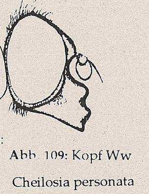 DJN-Schwebfliegen Bothe 1994 Abb.109 Ww C.personata Kopf.png