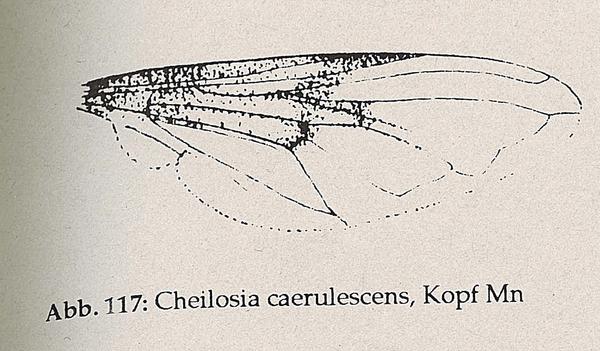 DJN-Schwebfliegen Bothe 1994 Abb.117 Mn C.caerulescens Flügel.png