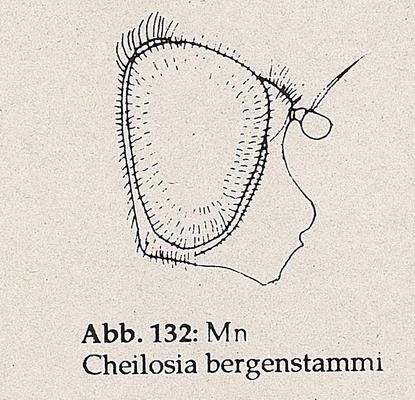 DJN-Schwebfliegen Bothe 1994 Abb.132 Mn C.bergenstammi Kopf.png