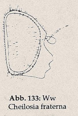 DJN-Schwebfliegen Bothe 1994 Abb.133 Ww Cheilosia fraterna Kopf.png